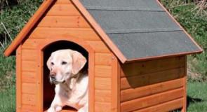 Il cane non vuole entrare nella cuccia? Alcuni consigli per abituarlo