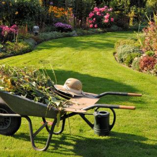 La cura del proprio giardino
