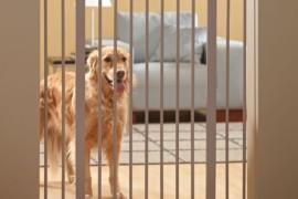 Come realizzare un cancelletto per cani
